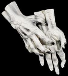 White Skeleton Hands