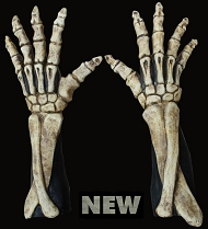 Large Skeleton Hands - Bone